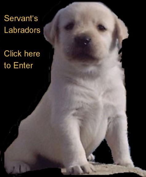 Dog Show Superintendents California